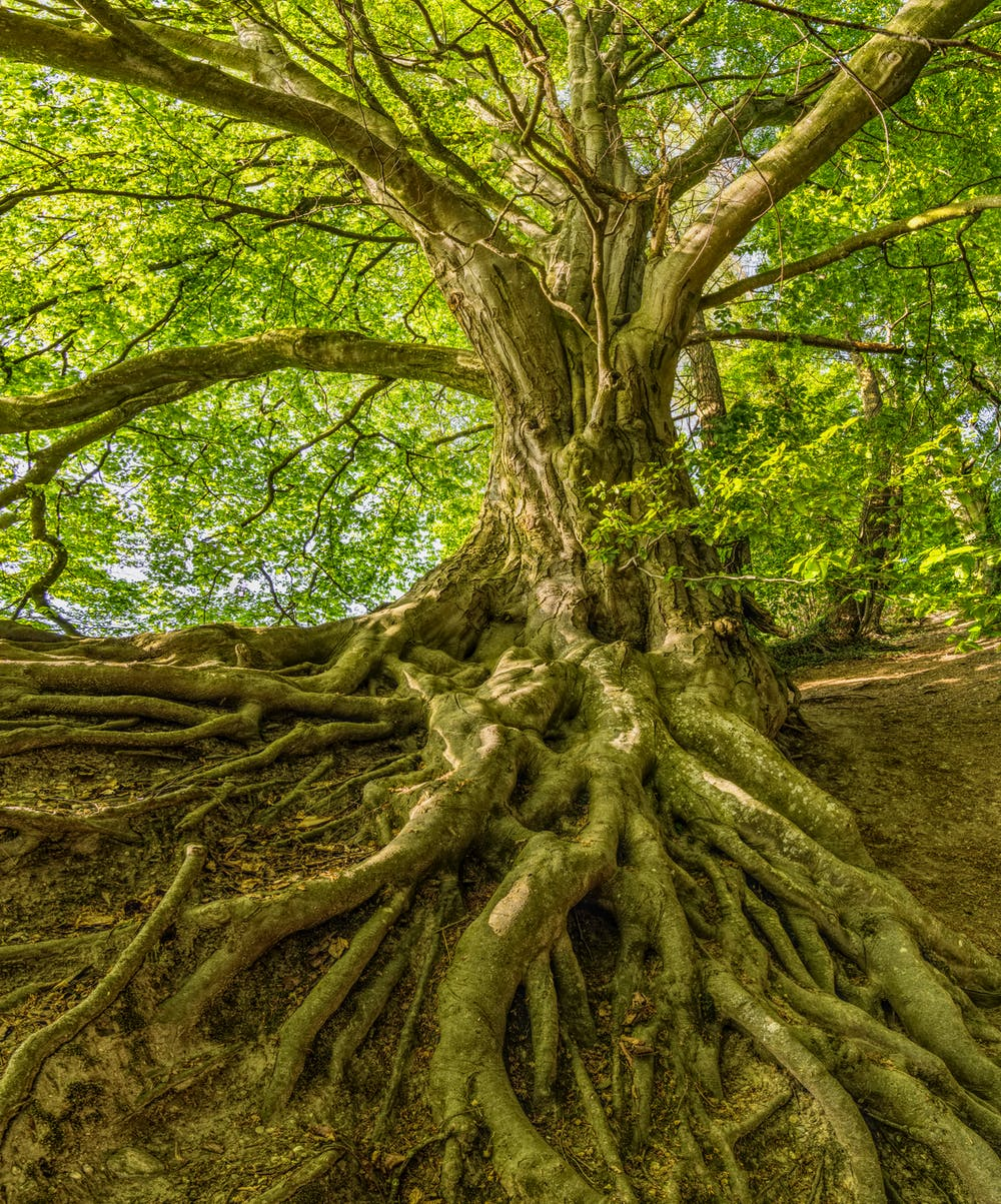 a tree and its roots